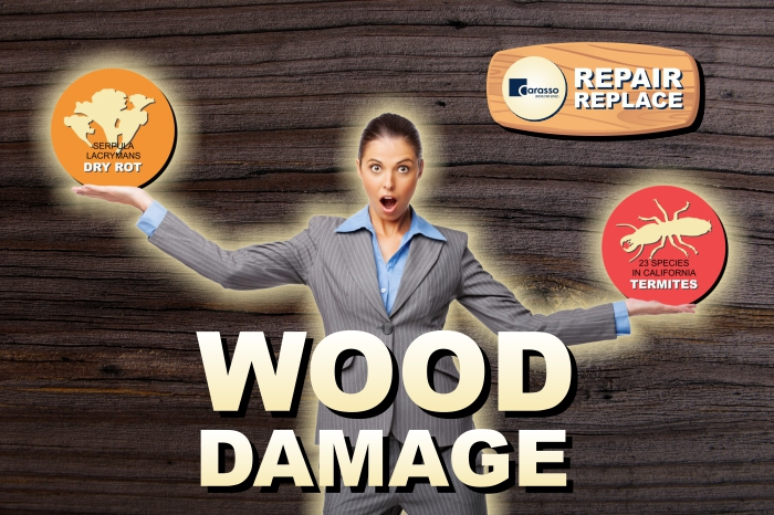 DRY ROT / TERMITE DAMAGE REPAIR